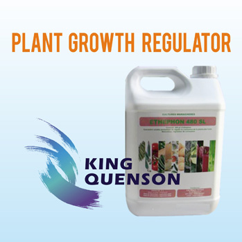 Plant growth regulator-KING QUENSON